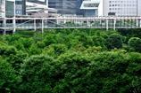 都会のジャングル