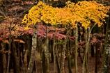 秋の箱根を訪れて -黄-