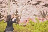 ありがとう桜