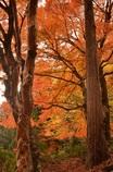 出雲の紅葉