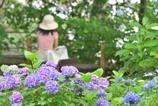 紫陽花の咲く公園で待っているから...