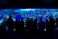 weekend aquarium