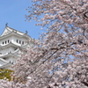 世界遺産に添える桜