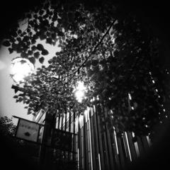 銀座の灯り -街路樹-