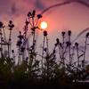 AZAMI♡ Sunset