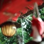 CANON Canon EOS 5D Mark IIで撮影した(雨をとりに行く)の写真(画像)