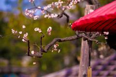 待ち遠しい冬の〆春の始まり