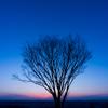 樹・・・夕暮れ