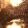 夕日 × 桜 ×