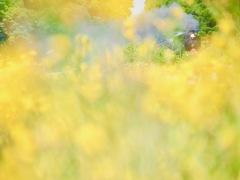 Yellow wonderland