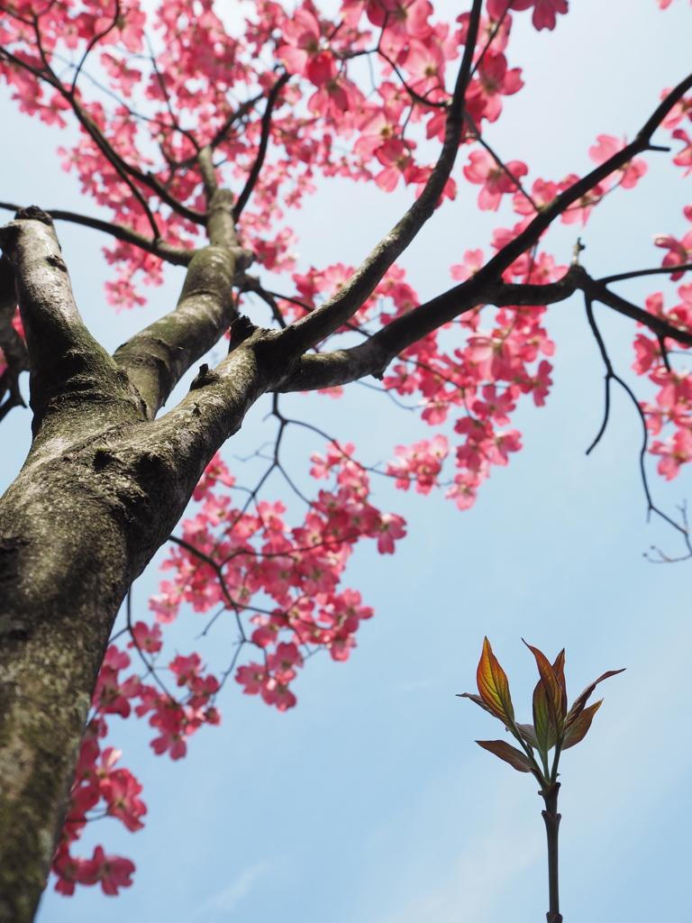 いつか花咲く日を夢見て