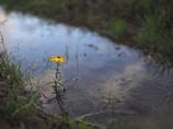 ここにしか咲かない花