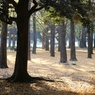 代々木公園 (10)
