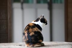 高尾山 切り株猫