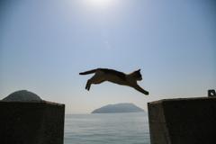 飛び猫!その4