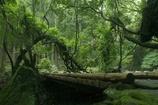 トトロの森へ