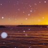 ネコ港の雪