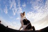 なにか世界の重大な秘密に気付いた猫。