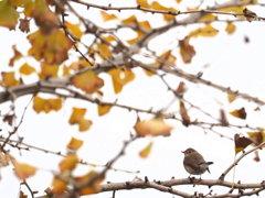 秋を見つめて