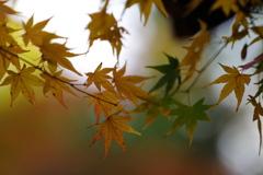 染まりゆく秋