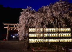 忠義の桜【大石神社】