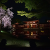 鳳凰の夜桜【平等院】