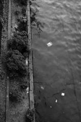堂島川は蟹だらけ
