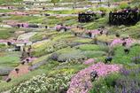花結びの谷