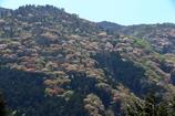 サクラヶ岳