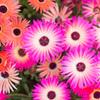 「Fleur brillante .#1」