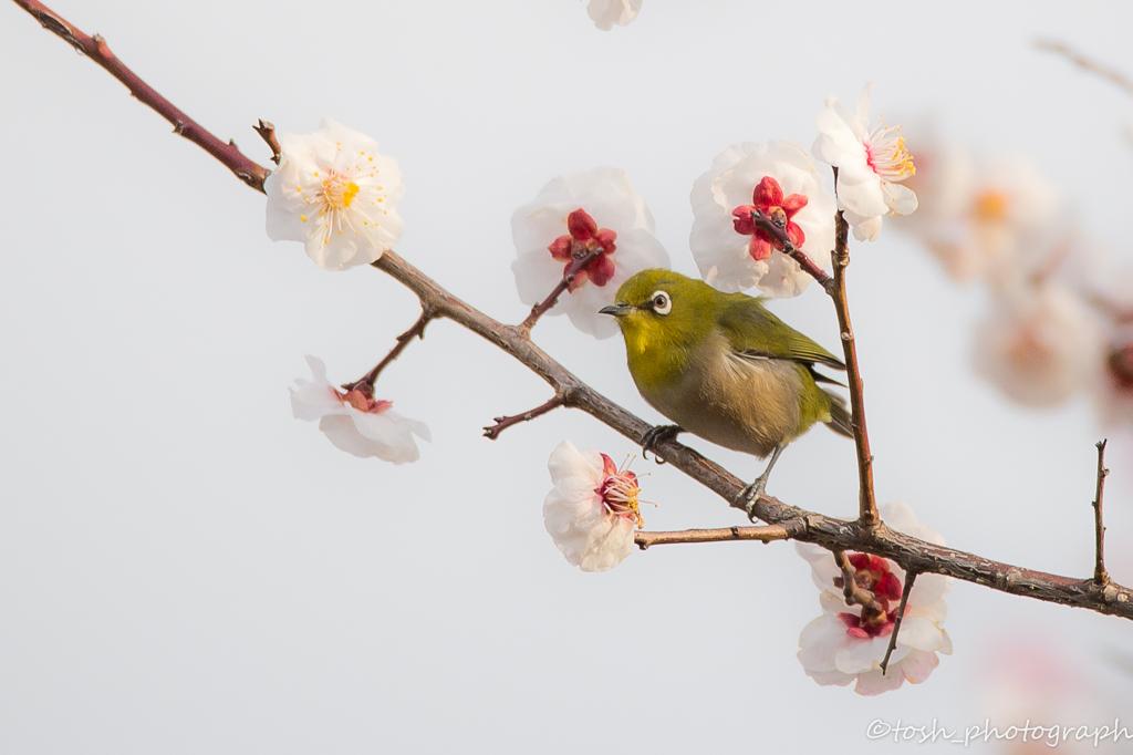 「来春へ」