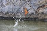 池のカワちゃん2