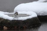 雪が積もったが、、、その1