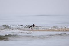 浜辺の鳥3