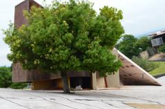 坂道で育つ木