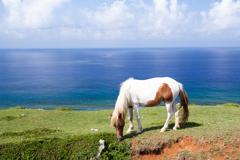 与那国馬と青い海