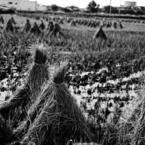 収穫の秋2