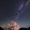 春暁の山桜 ver.2