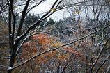 紅葉雪景Snap*3