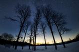 星空の下の雪原の木々