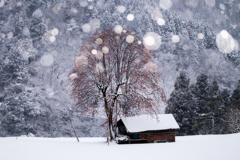 冬の柿の木*1