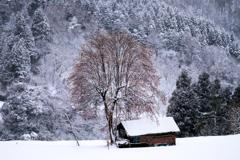 冬の柿の木*2