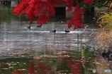 池の紅葉添え