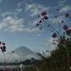 富士に朝の挨拶