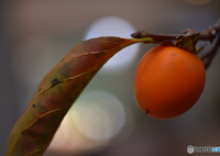 NIKON NIKON D810で撮影した(可愛い秋)の写真(画像)