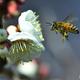 蜂が飛ぶ。。