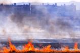 鵜殿の葦焼き2017-4