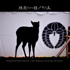 雄鹿の一日/その五
