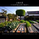 大阪珍景 ~この木なんの木、その2~