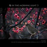 梅 in the morning light 3